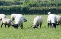 Farmers urged to submit livestock for post-mortem due to growing Schmallenberg virus threat