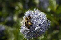 Tesco to run sugar collection scheme to help struggling bees survive