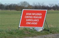 Bird flu confirmed in Suffolk breeding rearer unit which houses 23,000 birds