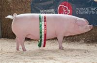 Pedigree Welsh Pork awarded 'Traditional Specialities Guaranteed' status