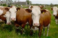Police raid Irish border farms after livestock rustling incidents