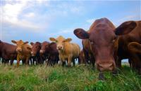 'RESETing' farmers mindset: Behavioural change model could influence farmers to reduce antibiotic use