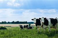 Classification scheme to enable 'targeted support' for dairy farmers