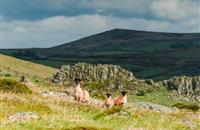 2016 Welsh red meat production shows greater output and increased incomes