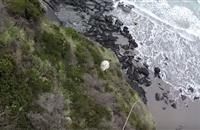 Video: Sheep rescued from steep cliff after being chased by dog
