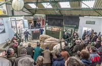 £1.7bn worth of livestock sold through auctions in 2016, figures show