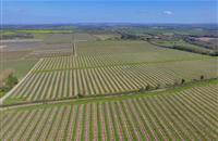 'Well estbalished' 364 acre fruit farm for sale in Kent