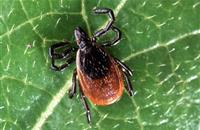 Study shows conservation management increases disease-carrying ticks