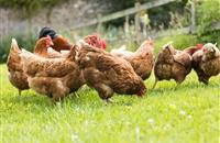 CBBC programme shows children learning all about free range eggs