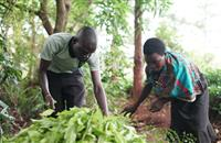 Sainsbury's unveils new sourcing approach to give support to farmers worldwide
