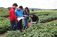 Scotland seeks more 'tattie roguers' - potato disease police