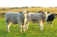 Dunbia and Dawn Meats join in new strategic partnership