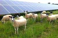 UK renewable energy generates more electricity than gas and coal for first time