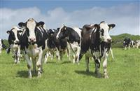 Global collaboration 'vital' for future of dairy genetic selection