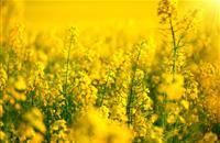 Conservative MEP fails to stop EU neonicotinoid ban