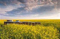 Pan-European study links neonicotinoid pesticides to bee decline