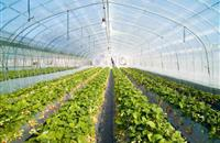 Wireless technology for greenhouse management