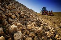 Agreement on sugar beet contract terms announced for 2018/19