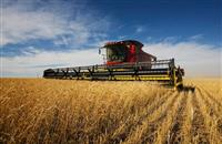 Survey shows spring barley popularity continuing to grow, but OSR down