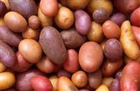 British Potato Industry Award nominations now open!