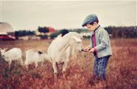 'Farm Secure' app created to educate children on farm dangers