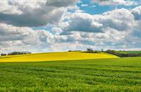 Stabilisation in farmland values during Q2 of 2017 due lack of supply