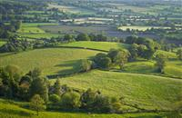Compulsory purchase 'risks undermining relationships' between farming and forestry