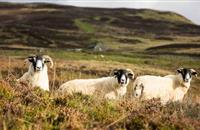 Upland farmers could earn '£15k a year' with private water management contracts