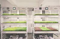Ikea's vision for the future of farming on display in the heart of London