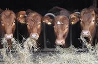 Northern Irish farmers urged to submit BVD claims before 30 Sept deadline