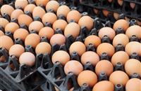 Free range industry to see huge investment as major retailers pledge cage-free