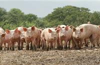 Deadline approaches to fill in EU labour survey for UK pig industry