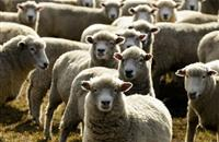 93% of farmers use 'important' livestock markets, according to survey