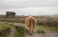 Poorly negotiated trade deals 'risks damage' to Scotland's beef industry