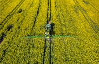 UK government now supports outright ban on neonicotinoids, Gove states