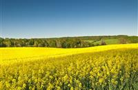 EU delays blanket ban decision on neonicotinoids