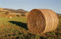 Farmers urged to act now and assess fodder stocks