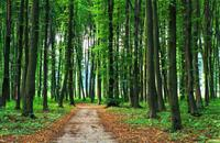 Farmers urged to apply for new woodland grant