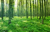 Forestry Commission urges Scottish Borders' farmers to plant trees