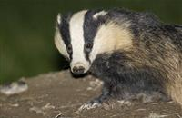 Government announces review of 25-year bovine TB strategy