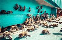 'Biggest theft': One million bees stolen from farmer's field in Oxfordshire