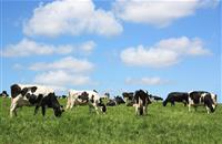 Grass-fed dairy cows produce milk with higher levels of omega-3