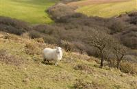 Decision to close Areas of Natural Constraint scheme 'major blow' to upland farmers