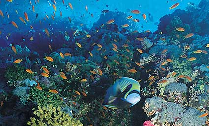 Blue Reef Aquarium and IMAX 3D Cinema