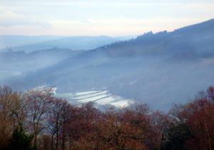 Brechfa Forest