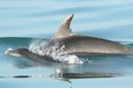 Seamor Dolphin Research Boat Trips