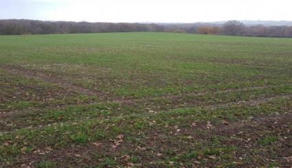 75.87ac Arable Land & Woodland at Chidleys Farm