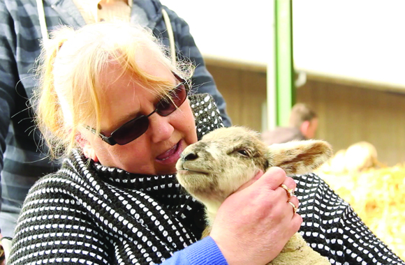 Lambing Sunday event at Bishop Burton College