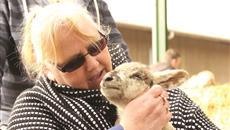 Lambing Sunday event at Bishop Burton College