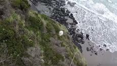 Sheep rescued from cliff after being chased by a dog April 2017
